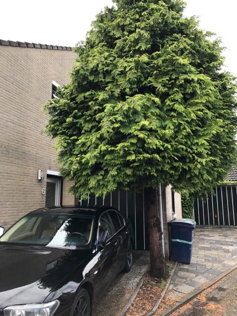 Tree removal in Almere