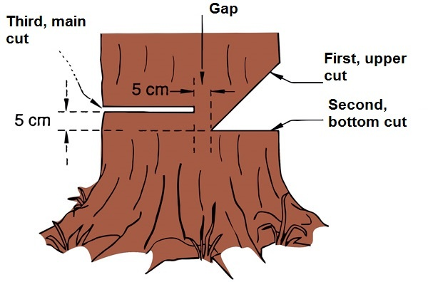 Tree felling and removal cutting technique