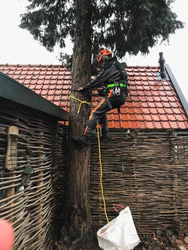 Tree felling in Amersfoort
