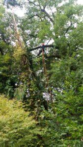 Felling a big dead tree