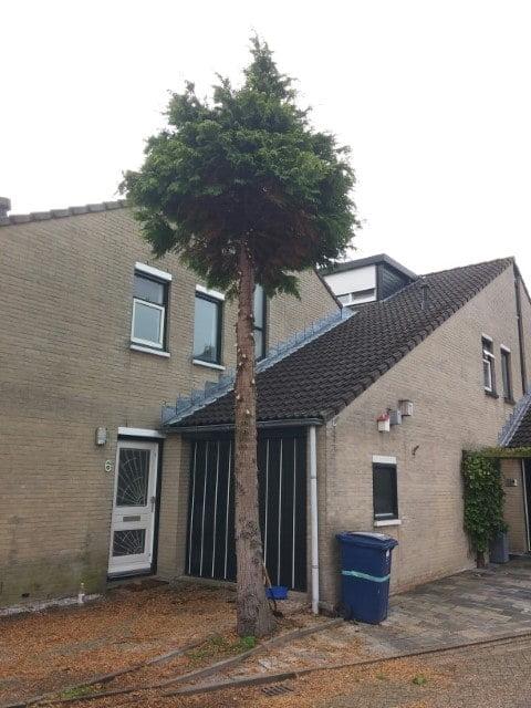 Boom verwijderen in Almere eerst de takken weg.