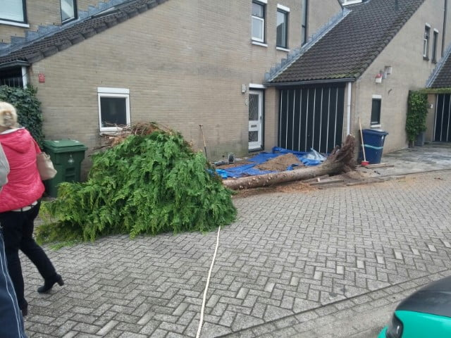 Tree felling and removal in Almere