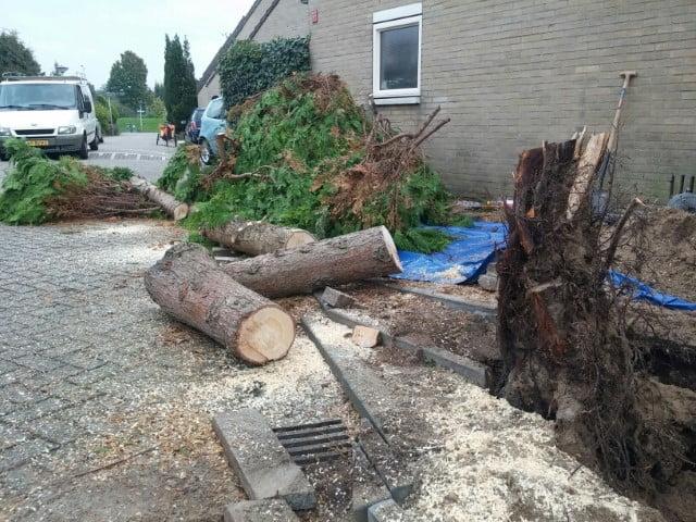 Tree felling in Almere