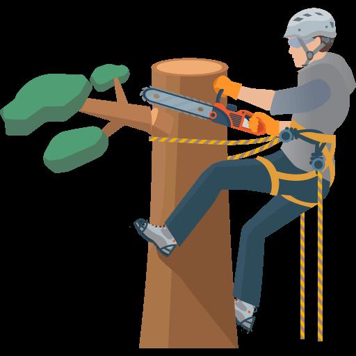 Klimtechniek voor bomen kappen. Veilig en verantwoord.