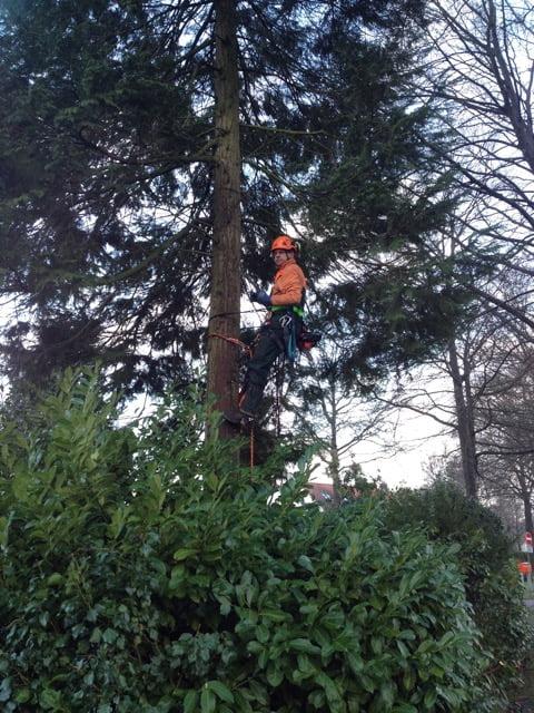 Eerste de boom inklimmen en elke tak met de hand afzagen