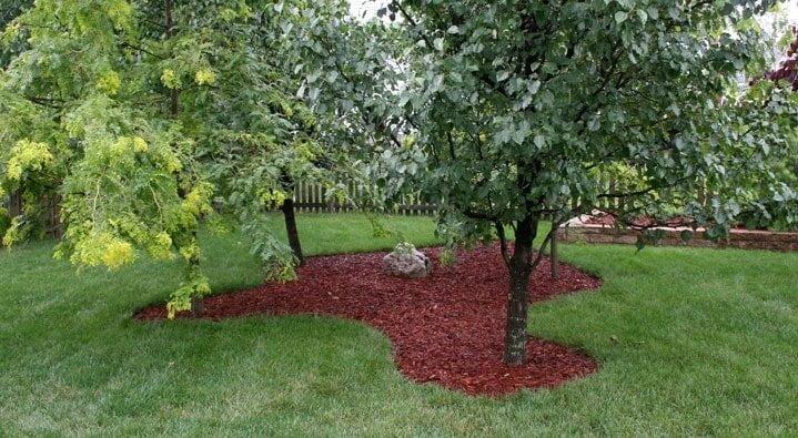 Groeiplaatsverbetering door mulch