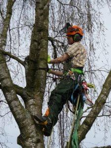 bomen kappen in Arnhem