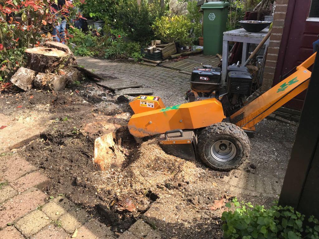 Boomstronk verwijderen in Zaandam