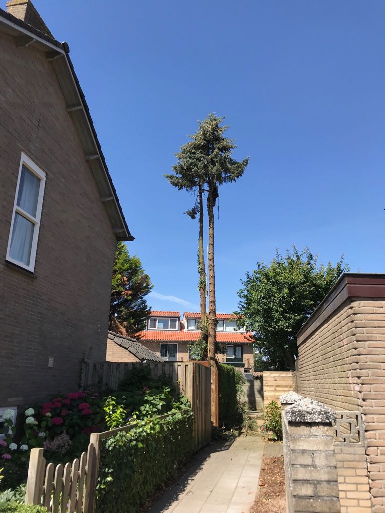 Boom kappen in Harderwijk