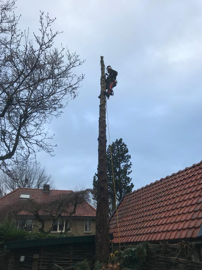 Boom kappen in Amersfoort