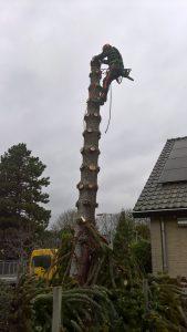 Apenboom kappen in Arnhem-Zuid