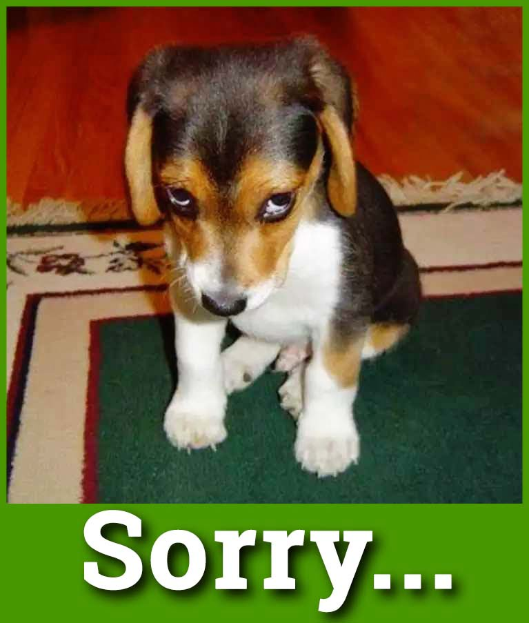 sorry puppy