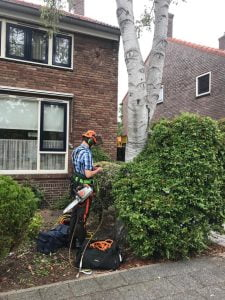 Berkenboom gekapt in Amstelveen