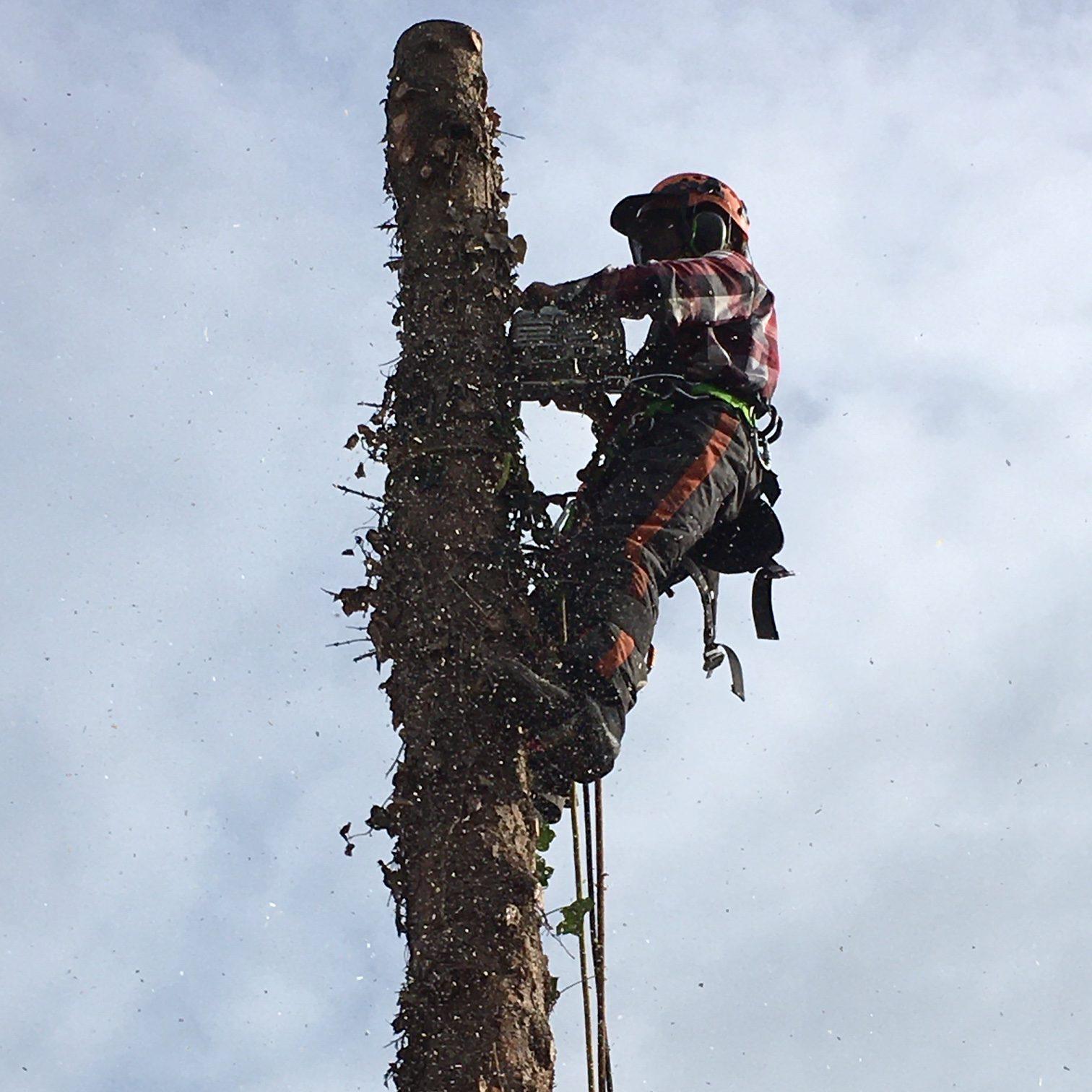 Kortenhoef boom kappen