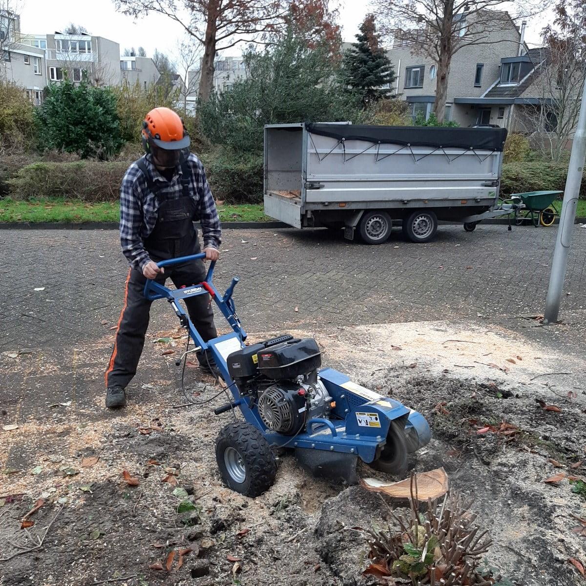 Bomen kappen in Hillegom