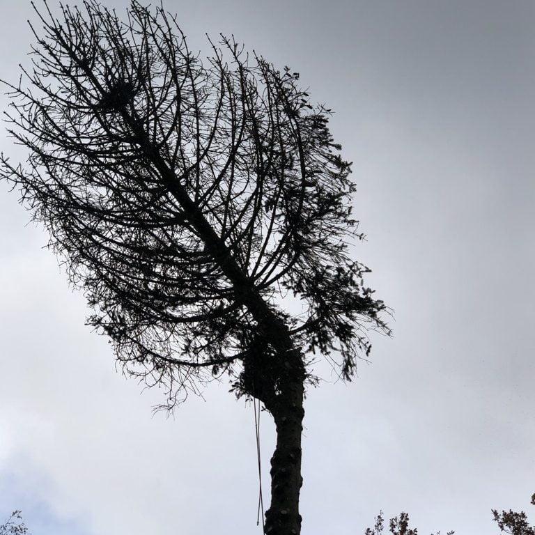 Kappen van boom in Ermelo