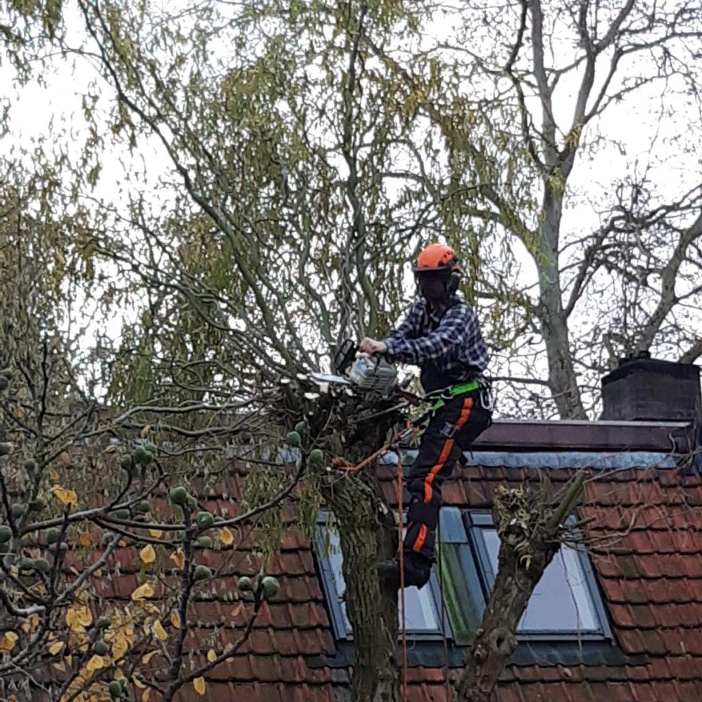 Bomen kappen in Nijmegen