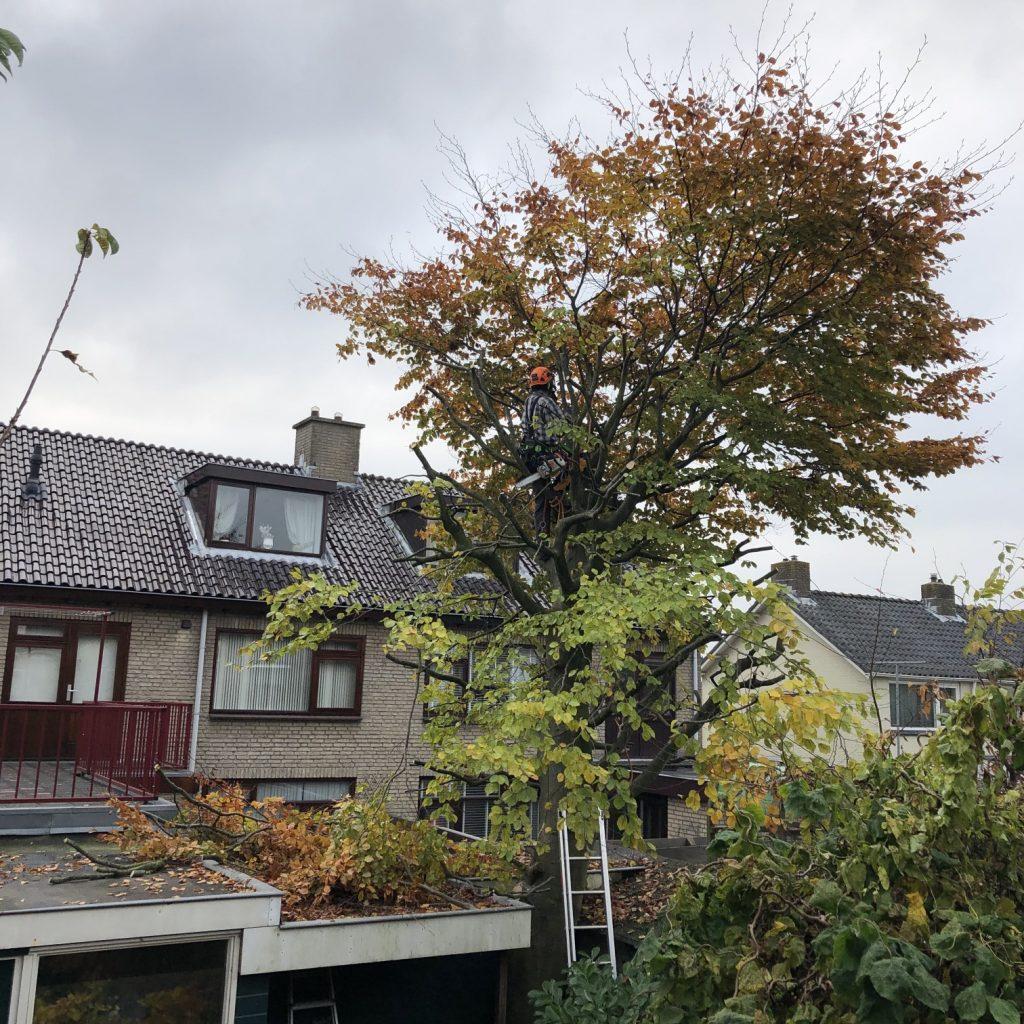 Bomen snoeien in Zwanenburg