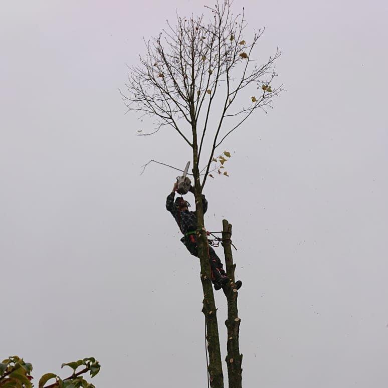 Bomen kappen in Woerden