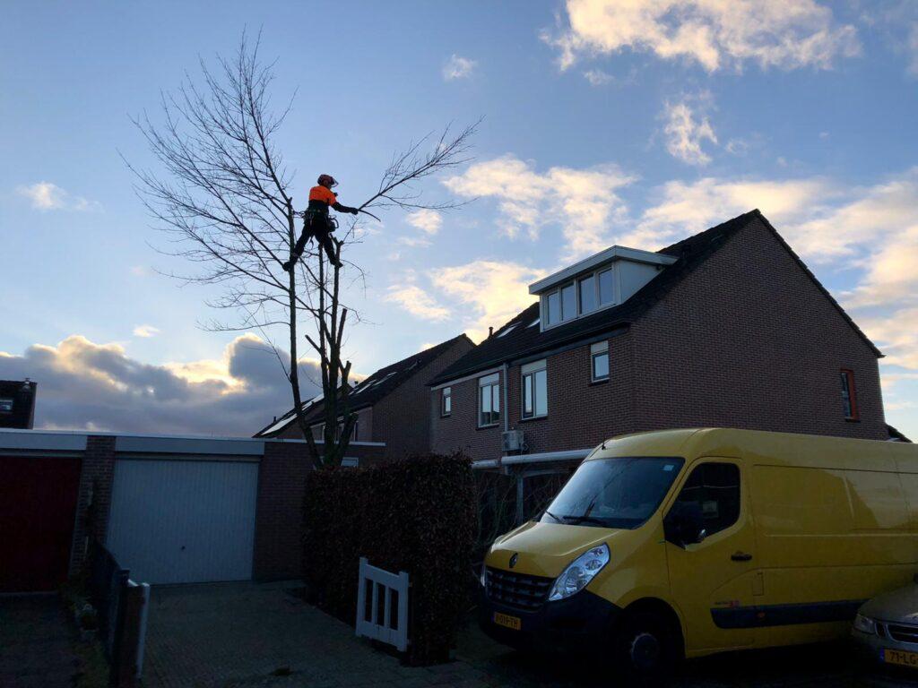 bomen kappen duiven